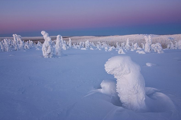 Frozen Trees of the Arctic