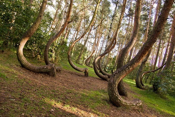 Crooked Forest In Poland Femininex,Funny Animal Pictures With Captions Clean