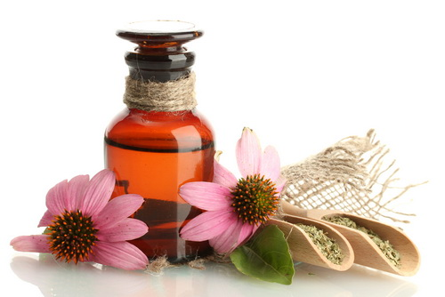 Echinacea antibiotic