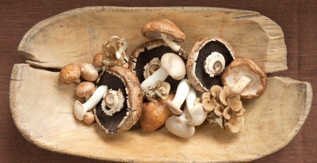 The healing mushrooms against the cancer